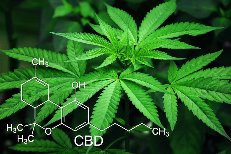 Cannabis Light retecamere_it_800x533